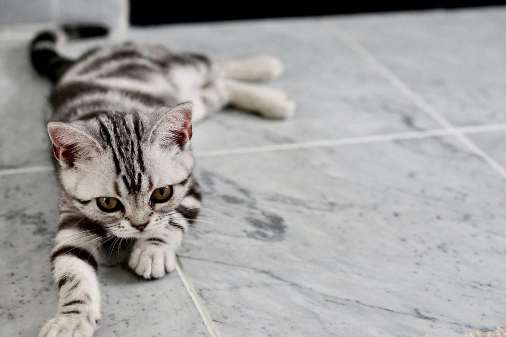 ar gyvūnai serga hipertenzija